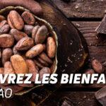 Découvrez les bienfaits du cacao