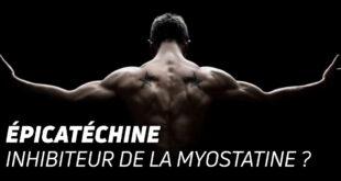 Épicatéchine inhibiteur de la myostatine ?