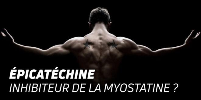 Cacao Épicatéchine : Inhibiteur de Myostatine ?