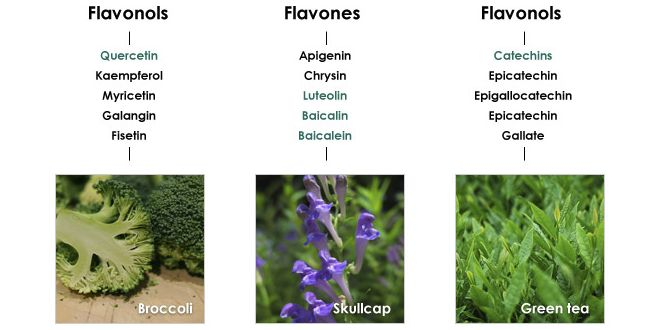 Flavonoïdes