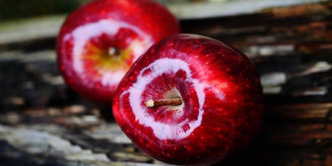 Pomme source de quercétine