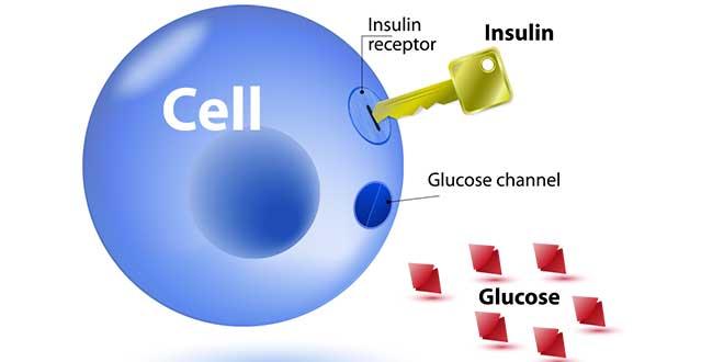Insuline de sensibilité