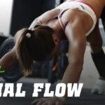Routine d'Entraînement Animal Flow