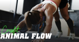 Routine d'Entraînement Animal Flow