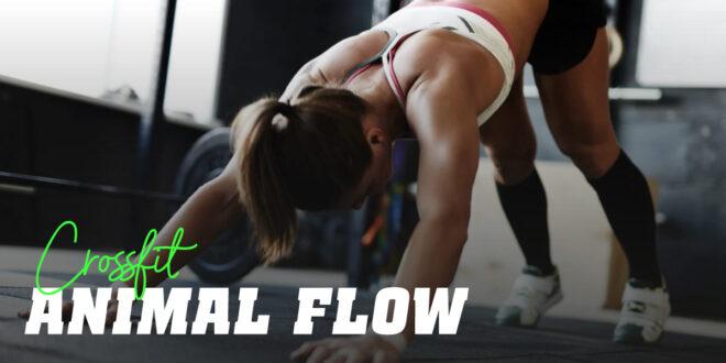 Motivez-vous avec la Routine d'Entraînement Animal Flow  !