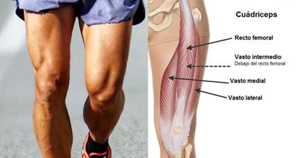 Fonctions du quadriceps au football
