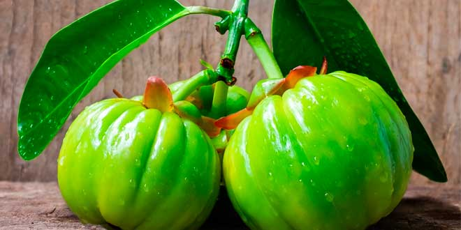 Properties of Garcinia Cambogia