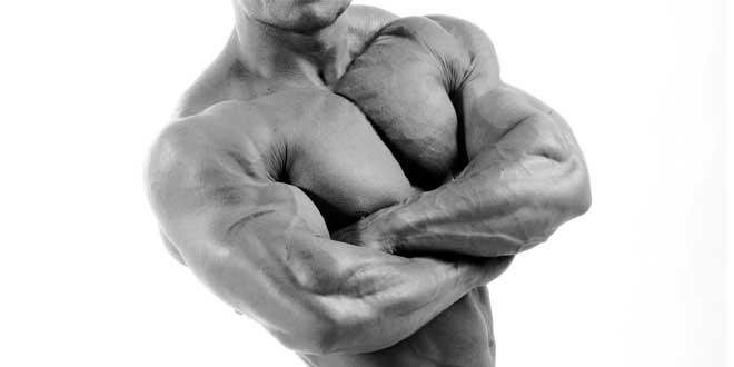 Muscle mass growth