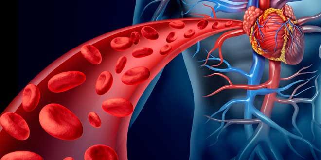 Nitric oxide effects on vasodilation