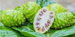 Noni fruit cut in half