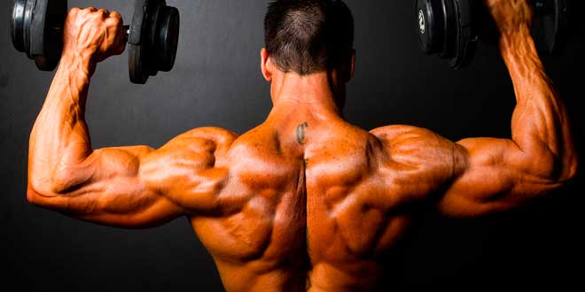 Increase your muscle growth