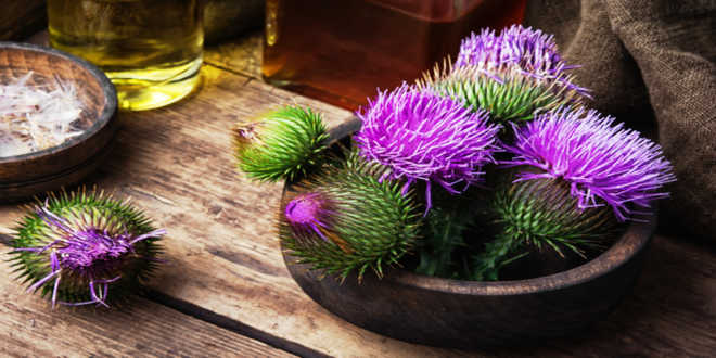 Milk thistle bowl