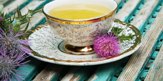 Milk thistle infusion
