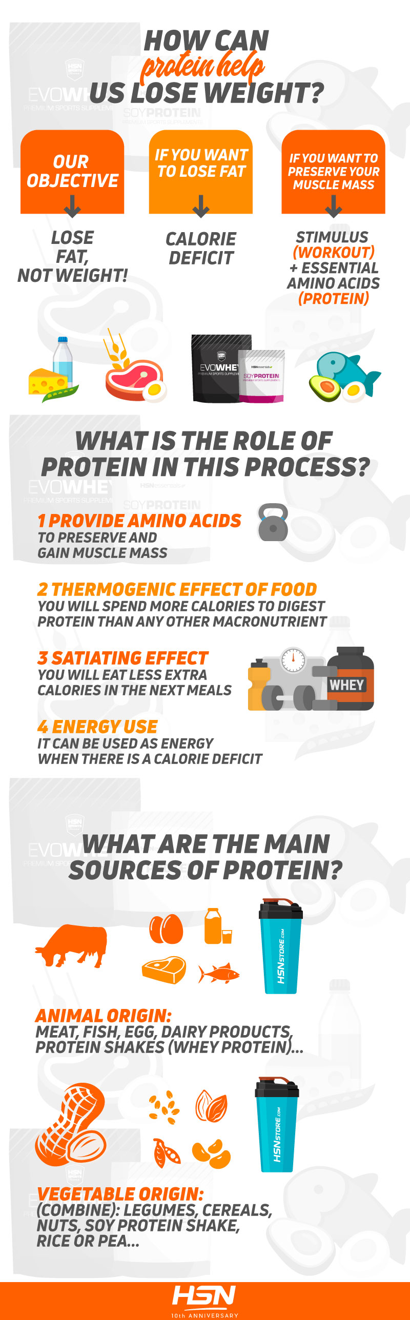 How does protein help you lose weight