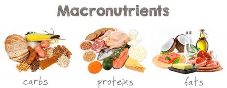 Macronutrients - carbs, proteins and fats