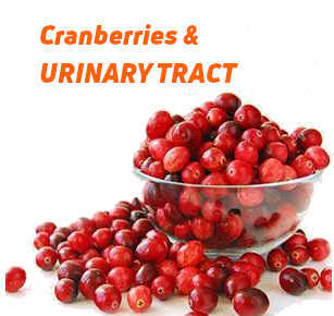 Cranberries and the Urinary Tract