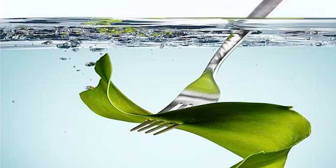 Fork and kelp leaf