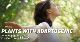 Plants with adaptogenic properties