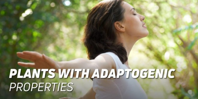Everything you need to know about Adaptogenic Plants