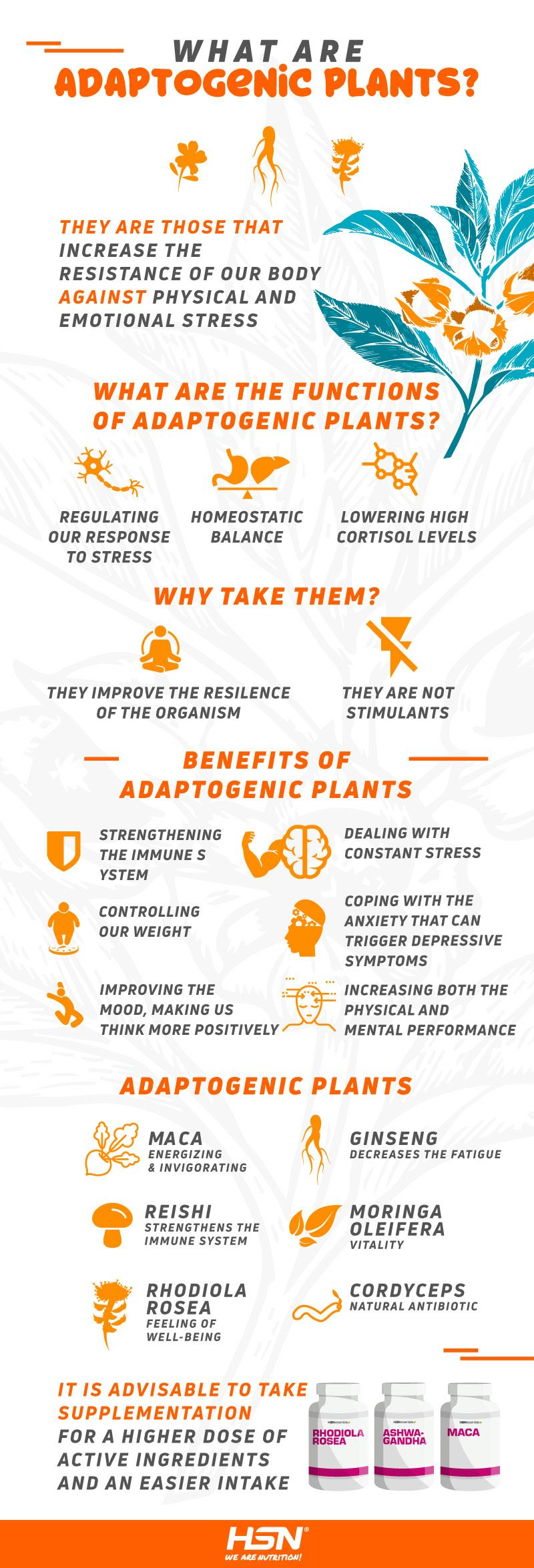 What are adaptogenic plants