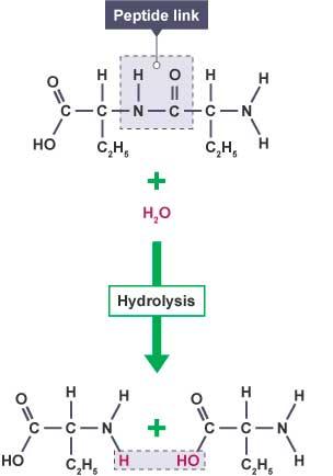 Hydrolysis process