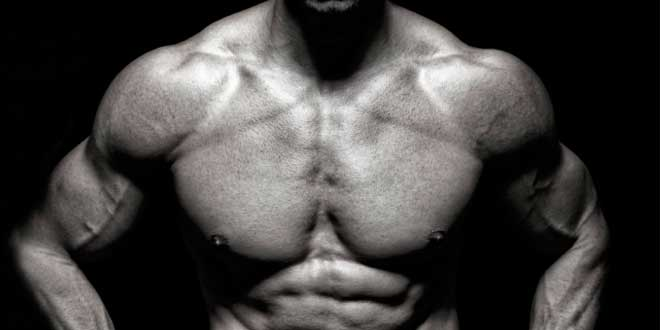 Muscle growth and physical definition
