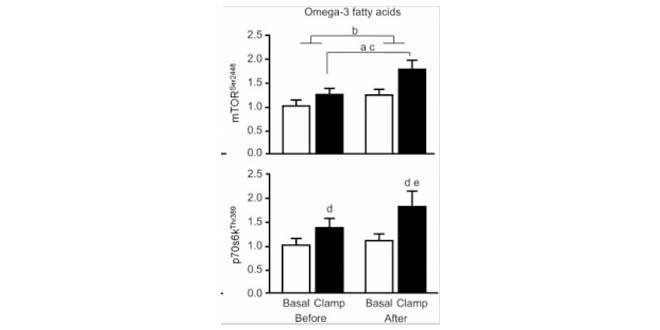 Omega 3 fatty acids mTOR pathway