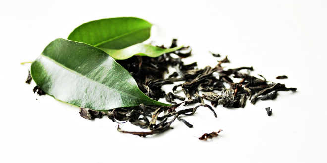 Natural green tea leaves