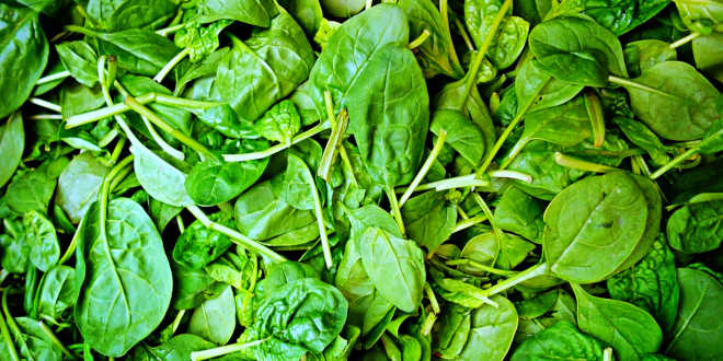 Spinach and iron