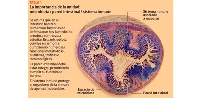 Microbiota, intestinal wall, immune system