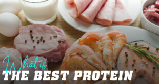 What is the best protein?