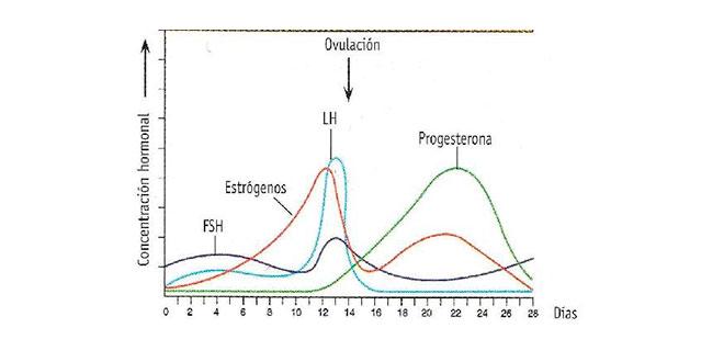 Ovulation graphic