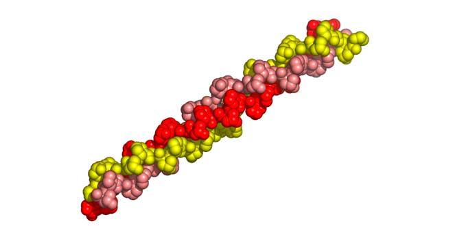 Collagen structure