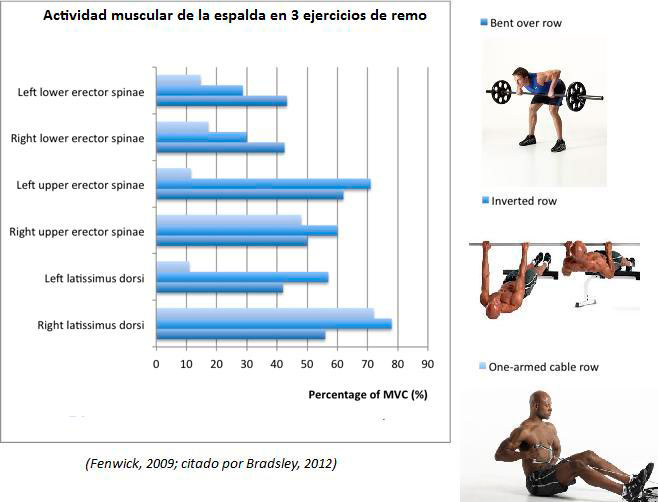 Back muscle activity