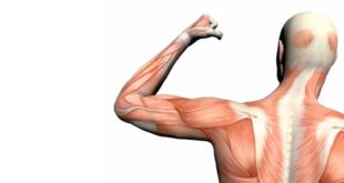 Types muscle fibre