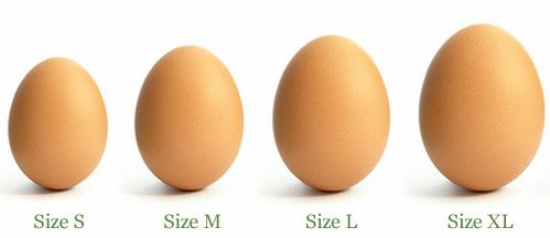 Different egg sizes