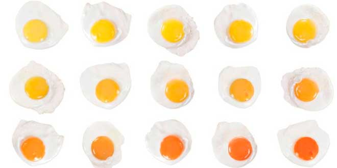 Egg yolks of different colors