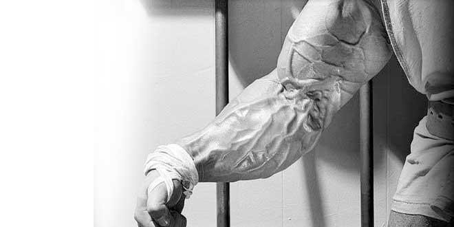Forearms 1