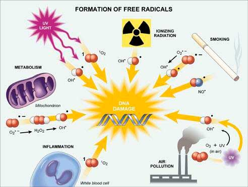 Formation of free radicals