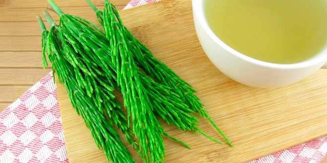 Horsetail: What is it, Use, Benefits and Medicinal Properties