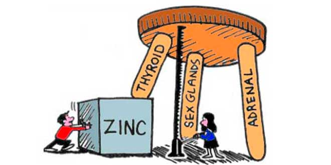 The importance of zinc