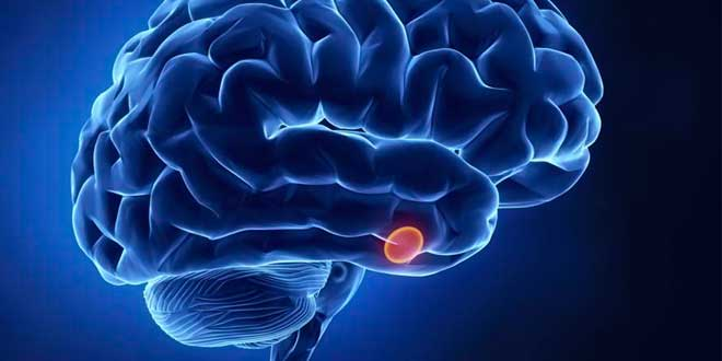 The brain and the pineal gland