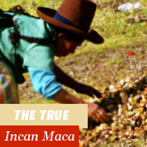 The authentic Inca Maca