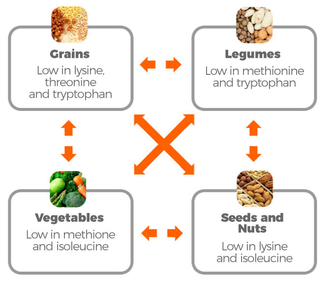 Sources of vegetable protein