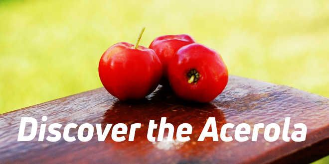 Acerola – Properties, Benefits, Uses, How to take it…