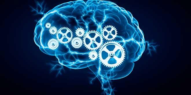 Tyrosine supports a healthy brain