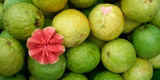 Guava and its vitamin C content