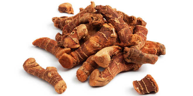 Alpinia galanga – Find out all its antioxidant and anti-bacterial properties