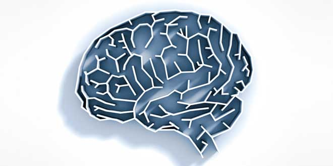 Acai supports the brain