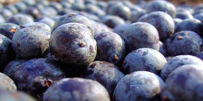 Acai berries nutrients